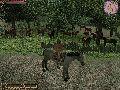 Alle meine Pferde (by ZIMMIZ)